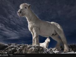 动物摄影欣赏:骏马