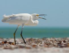 動物攝影欣賞:鳥的捕獵瞬間