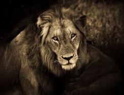 JoaoVictorBolan野生动物摄影