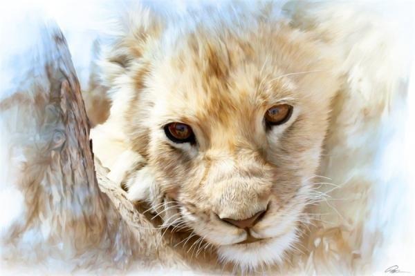 幼儿绘画作品狮子