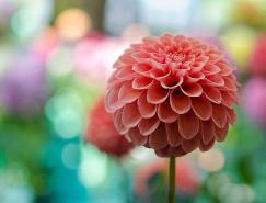 LindaWalker美丽的花卉摄影