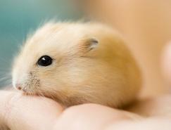 摄影欣赏:可爱的小动物