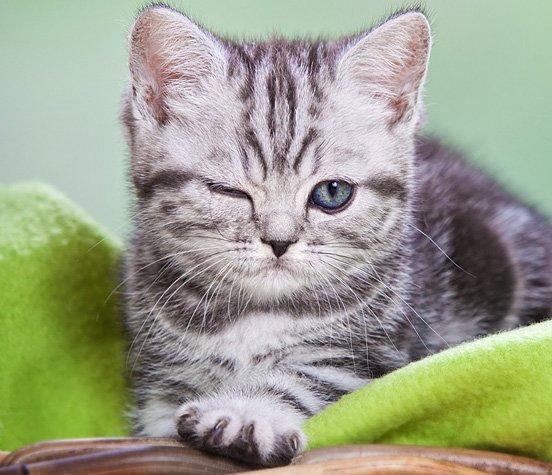 摄影欣赏:可爱的小动物(2)
