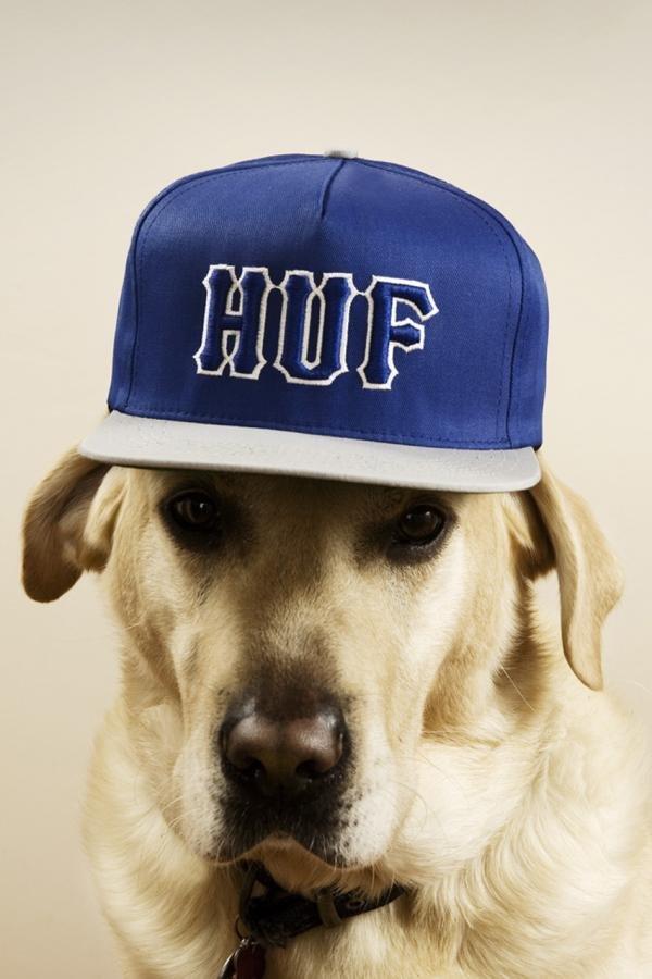 hoedholt摄影作品:戴帽子的狗