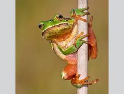 动物摄影:爬行和两栖动物