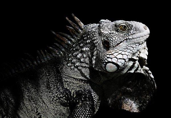动物摄影:爬行和两栖动物(9)