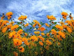 Irene花卉摄影欣赏