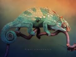 德国IgorSiwanowicz动物摄影:变色龙