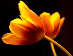 漂亮的花卉摄影佳作欣赏