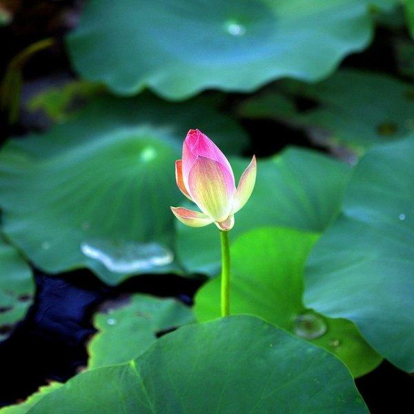 漂亮的花卉v花卉佳作欣赏视频库三图片