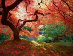 风光摄影欣赏:秋天的色彩