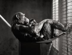 BrianDay黑白摄影欣赏