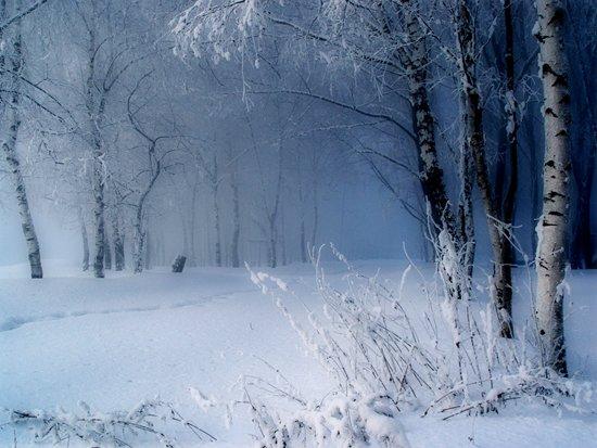 冬天雪景摄影作品