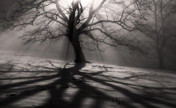 摄影欣赏:美妙的影子