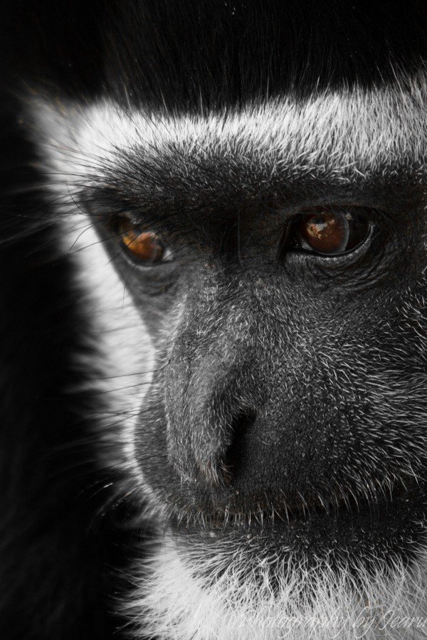 rud动物摄影作品