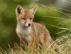 35张野生动物摄影欣赏