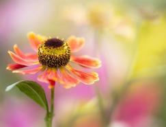 MandyDisher花卉摄影欣赏