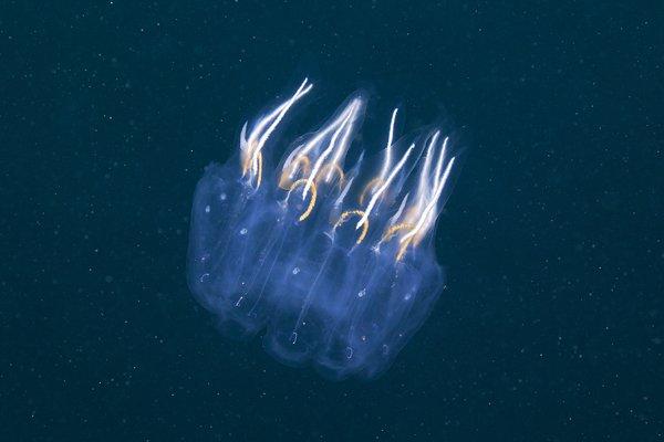 semenov奇妙的海底动物摄影(2)