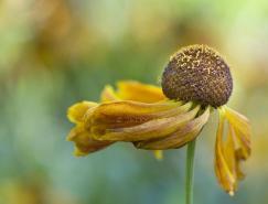 JackyParker漂亮的花卉摄影