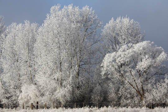 神奇的大自然:漂亮的雪树图片欣赏