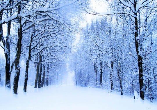 神奇的大自然:漂亮的雪树图片欣赏(2)