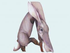 CaseyGirard的动物字母插画
