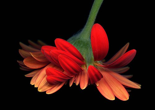 MagdaIndigo迷人的花卉摄影