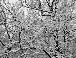 黑白雪景摄影欣赏