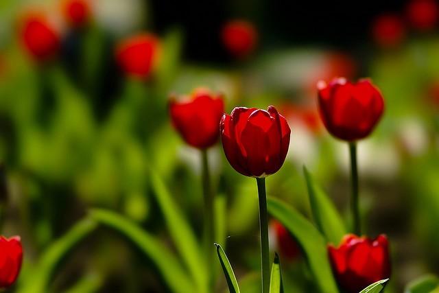 60张漂亮的花卉摄影作品