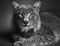 AlexanderVonReiswitz:动物肖像摄影