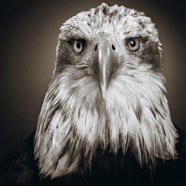 reiswitz:动物肖像摄影