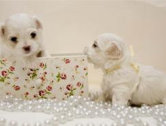 动物摄影欣赏:可爱的小狗