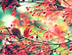 生动的花草和树木的世界:Nikki自然摄影欣赏