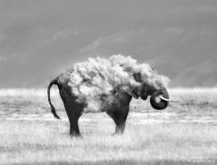 MarinaCano野生动物摄影