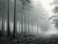 美丽的树:DavidBaker摄影作品