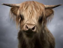 DavidBoni动物肖像摄影