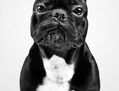 MarkoSavic作品:狗狗肖像摄影