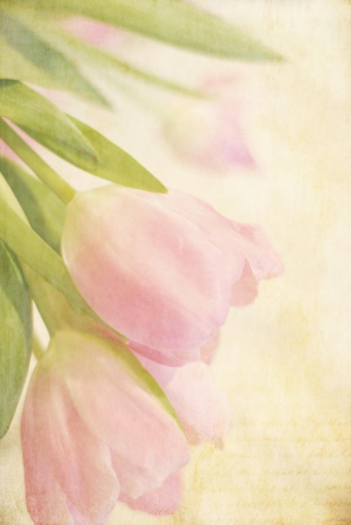 LindaTrine美丽的花卉摄影作品