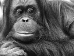 50张黑白动物摄影佳作欣赏