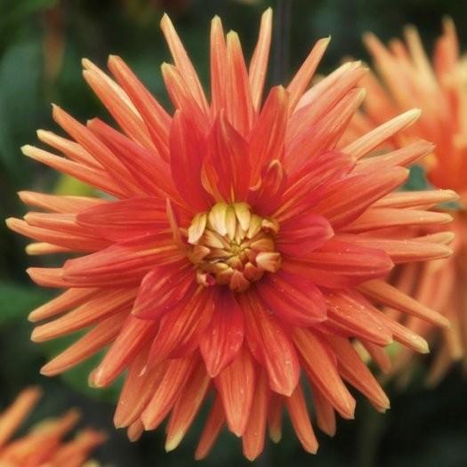 25张漂亮的花卉摄影作品