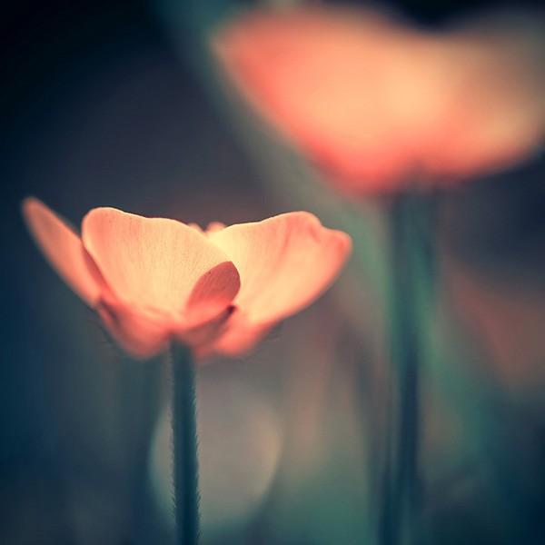 唯美的色调:IwonaDrozda-Sibeijn自然摄影欣赏