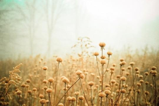 花卉摄影作品精选
