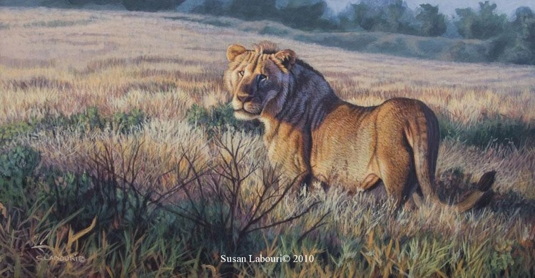 susan02labouri动物绘画作品欣赏