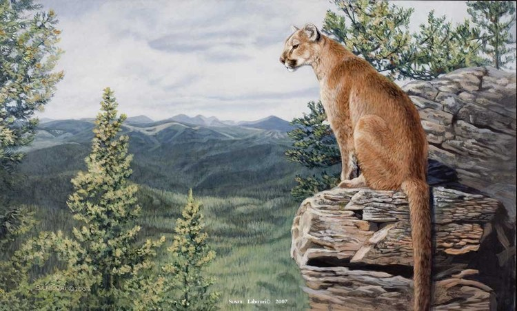 susan02labouri动物绘画作品欣赏(6)