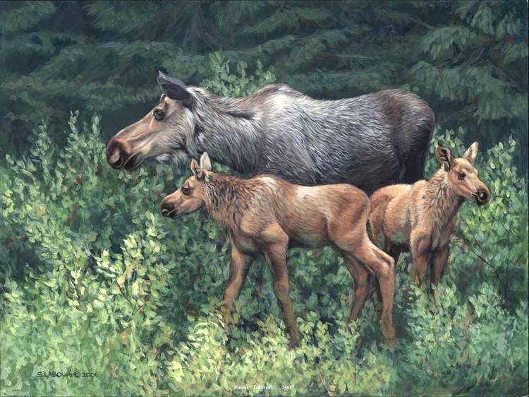 susan02labouri动物绘画作品欣赏(7)