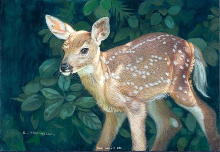 susan02labouri动物绘画作品欣赏(8)