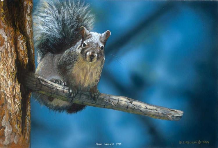 susanlabouri动物绘画作品欣赏(11)