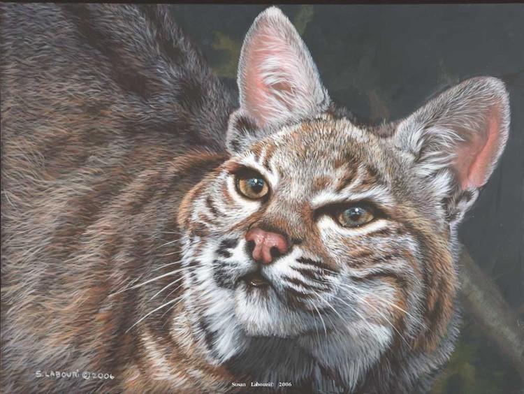 susan02labouri动物绘画作品欣赏(12)