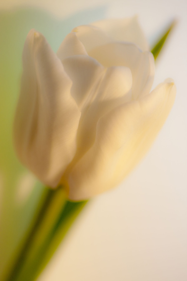 加拿大摄影师LeilaRaymond花卉摄影作品