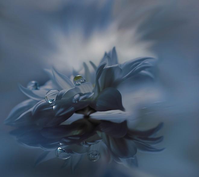 保加利亚摄影师JulianaNan梦幻般的花卉摄影